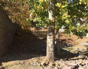 فروش شترمرغ زنده در تبریز