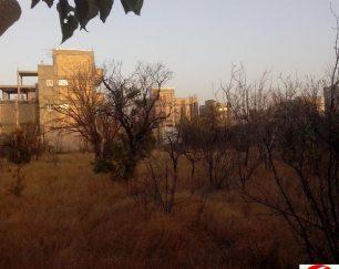 ۱۵۰۰متر زمین کشاورزی و باغی در تبریز