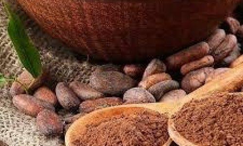 تولید عمده پودر کاکائو خارجی سیاه لاتامارکو
