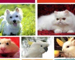 واگذاري بچه گربه نژاد وان رايگان