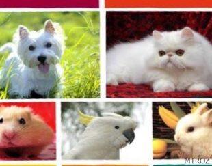 واگذاري حيوانات خانگي رايگان
