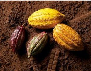توزیع پودر کاکائو آلکالایز اصل