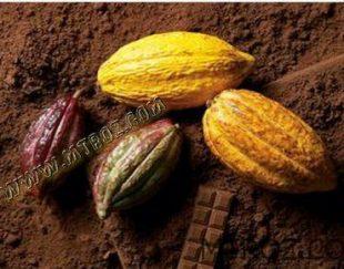 شکلات تلخ در سایا تجارت المان ارس