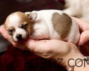 فروش توله سگ های اصیل در تبریز