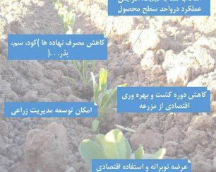 فروش نشاکار مزرعه با گارانتی تخصصی