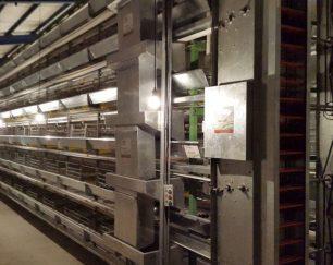 تجهیز سالنهای مرغداری با مدرن ترین قفس های پرورش مرغ تخمگذار و گوشتی و پولت