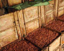 واردات دانه كاكائو از ساحل عاج و امريكاي لاتين