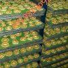تولید انواع دستگاه های خشک کن میوه،سبزی،انگور…
