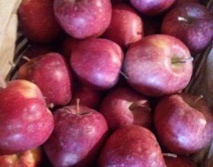 سیب صادراتی