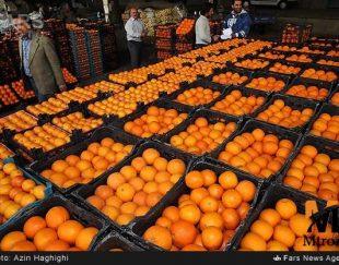 پرتقال درجه یک صادراتی