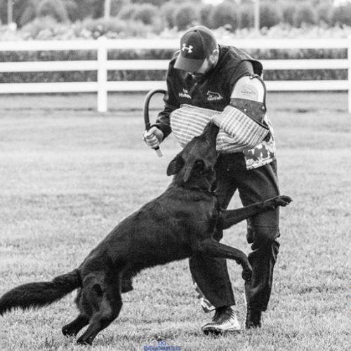 آموزش تخصصی مربی سگ ، تربیت سگ و پانسیون