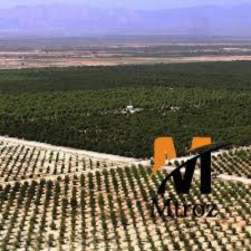 فروش زمین 600 هکتاری در مازندران