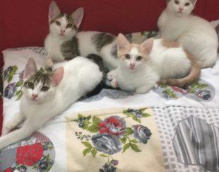 اهدای 5بچه گربه