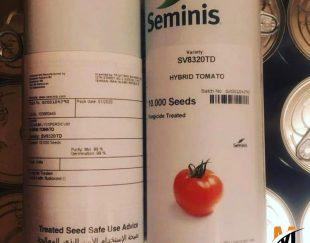 توزیع و فروش بذر گوجه فرنگی هیبرید 8320 سمینیس
