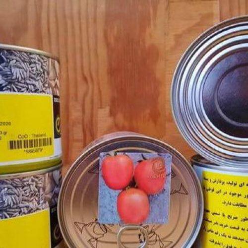 توزیع و فروش بذر گوجه افرا