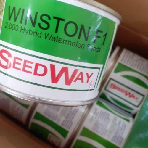 توزیع و فروش بذر هیبرید هندوانه وینستون