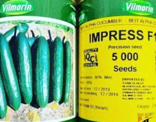 توزیع و فروش بذر خیار ایمپرس