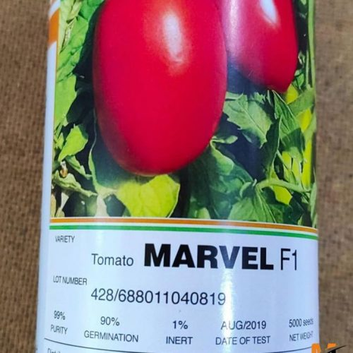 توزیع و فروش بذر گوجه مارول