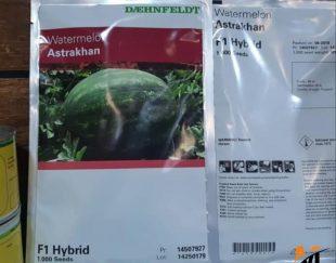 توزیع و فروش بذر هندوانه آستاراخان